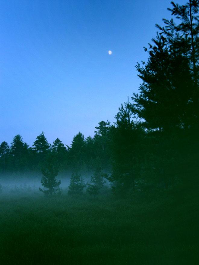 Moon-over-evening-bog-e