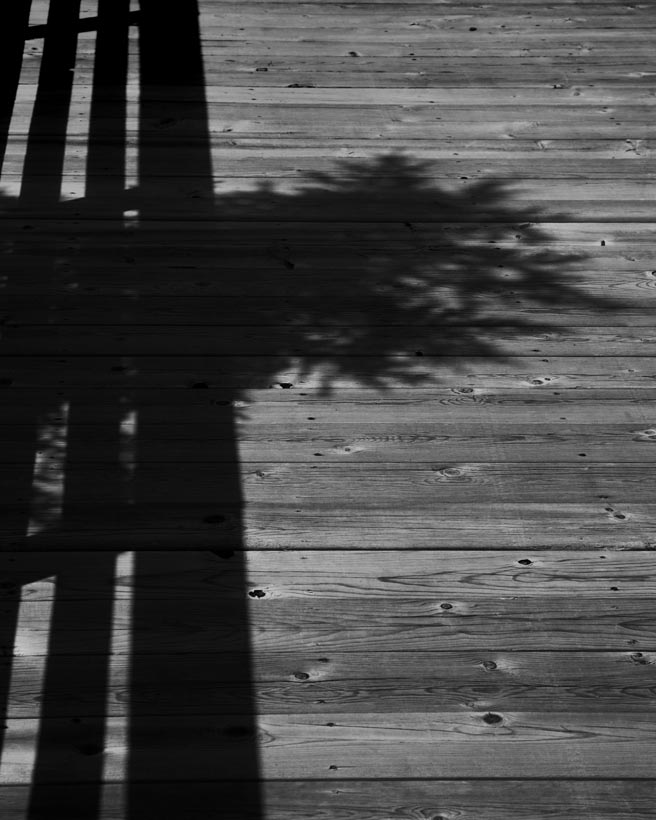 Pine-shadow-on-boardwalk-e