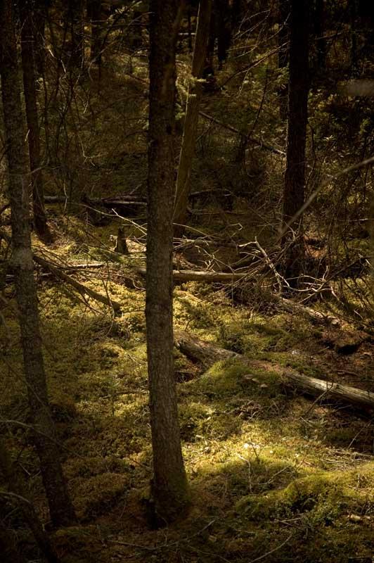 half-light-in-the-Tamarack-bog-e